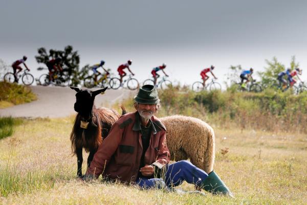 Pásztor ledõlve a legelõn messzirol figyeli a nyájat rá sem hederintve az elhaladó román kerékparos körveseny bringázóira 2018 szeptember 22-en Targoviste közelében